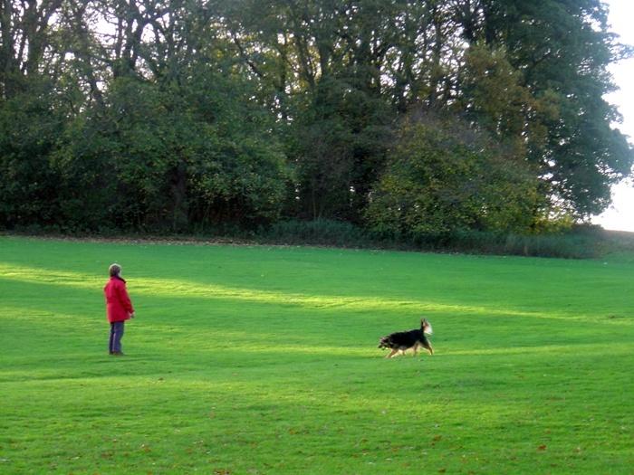 grass-dog