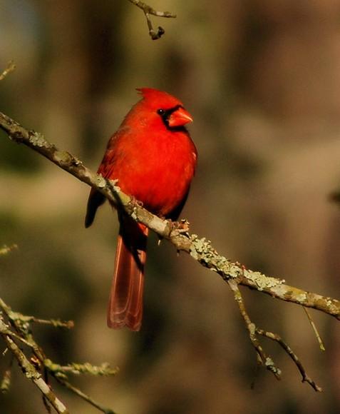 birds 007csc